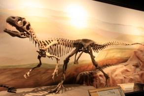 Herbívoro de 95 milhões de anos