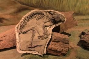 Toatherium, herbívoro, encontrado na Patagônia argentina