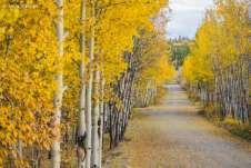 Estrada vicinal à Alaska Highway. Foi impossível resistir às paisagens incríveis do outono Canadense