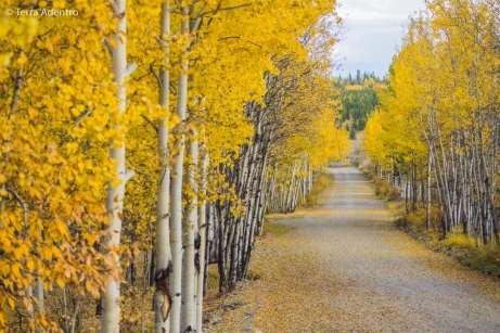 Sinais do outono no noroeste do Canadá