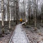 Laponia – Finlandia-8566