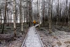 Laponia - Finlandia-8566