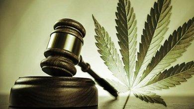 Photo of Legalização da maconha: debate para além da imaginação