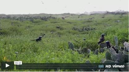 http://sites.nicholas.duke.edu/DukeSNAP/portfolio/terns-of-the-tortugas/