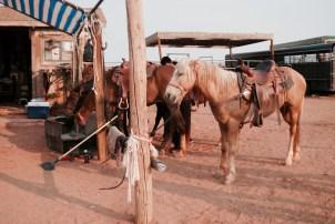 Cavalli prima dell'escursione alla Monument Valley