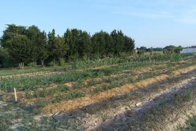 orto-biologico-terra-di-ciona-fiumicello (15)
