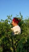 orto-biologico-terra-di-ciona-fiumicello (2-)