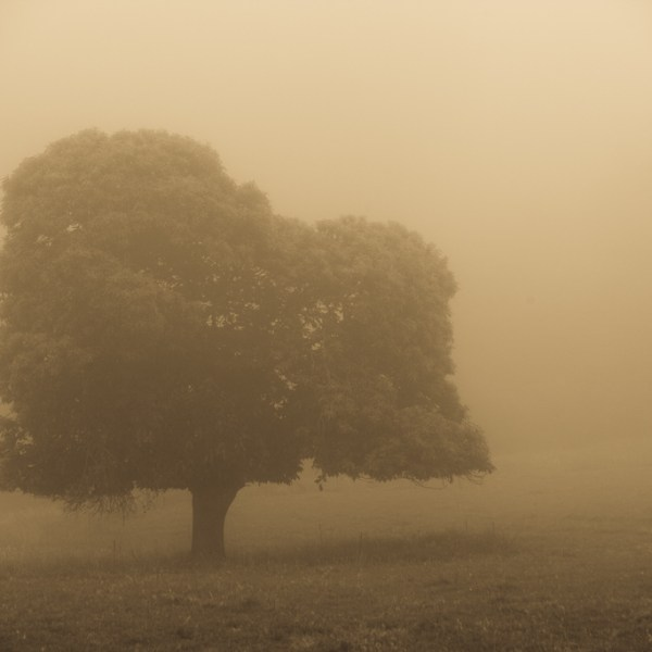 árbol vintage entre la niebla