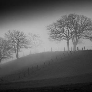 árboles con niebla,camino francés,provincia de Lugo, Galicia