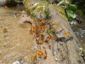 ¡mariposas!