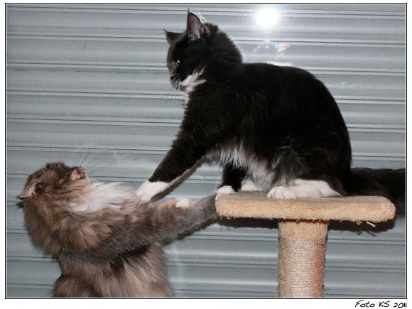 Die ultimative Katzen-Bürste?