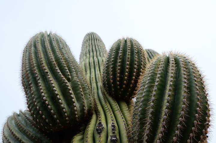 A Beginner's Guide to Saguaro National Park