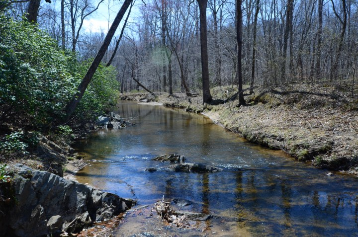 Hiking & Creeping in Prince William Forest Park