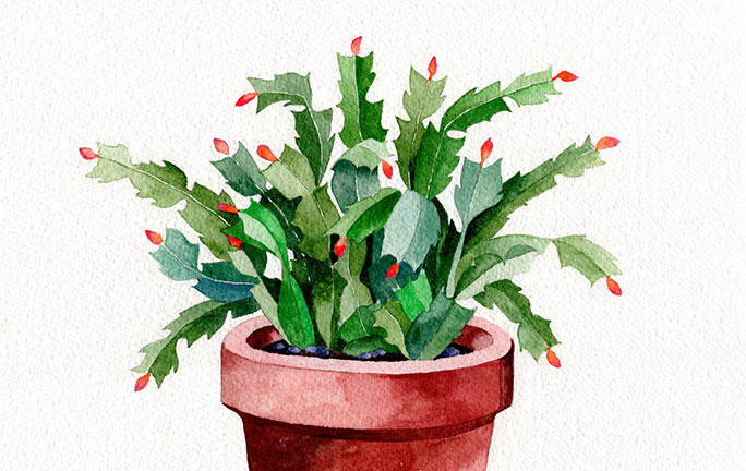cropped-painting-christmas-catus-gouche-feature