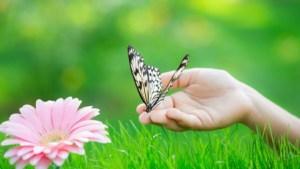 karlos-butterfly