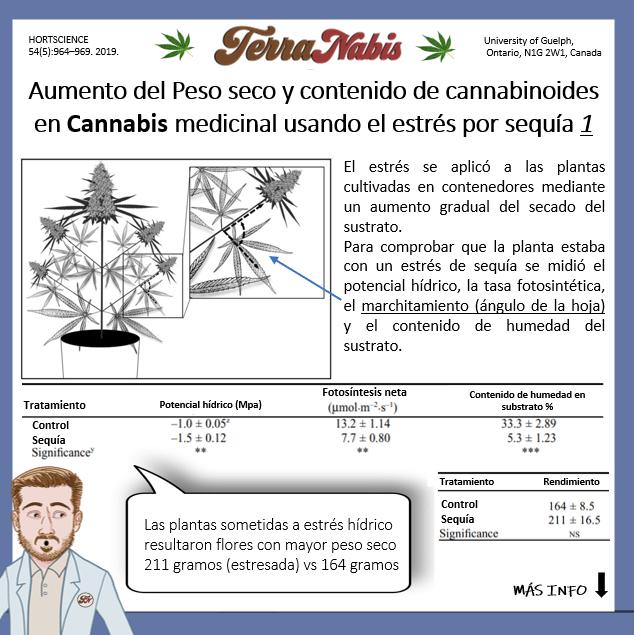 Dr nabis estres por sequia para peso y cannabinoides