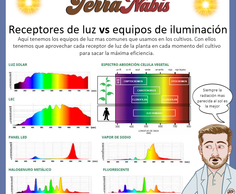 Dr nabis iluminacion