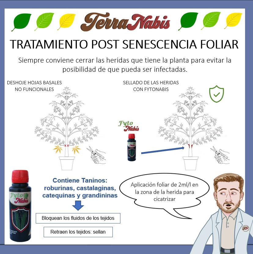 Dr Nabis tratamiento post senescencia