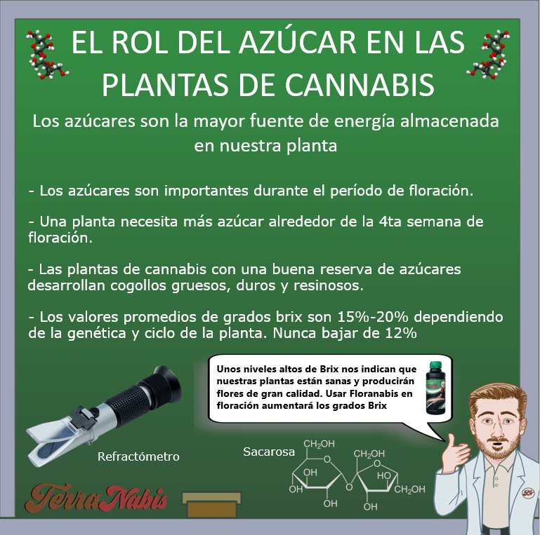 Dr. Nabis Grados brix cannabis