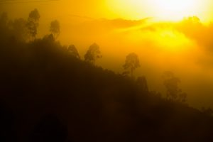 Sunrise at Bwindi Impenetrable Forest