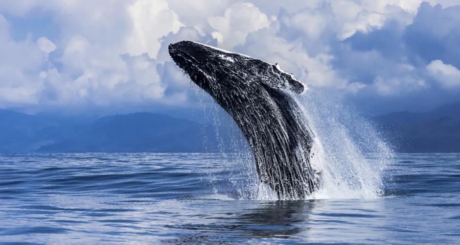 Whale in Costa Rica Beach