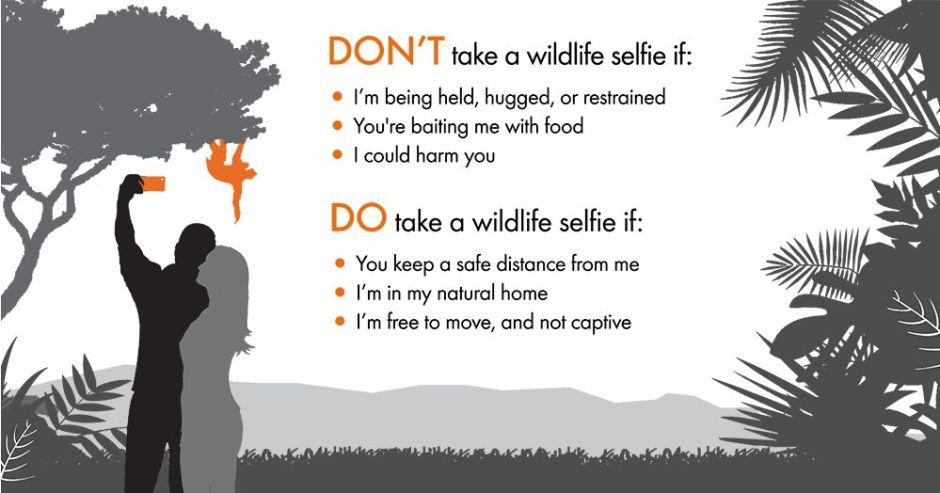 Selfies with wildlife