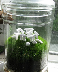 plants and hardscape - terrariums