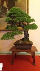 Pinus sylvestris by Mauro Stemberger