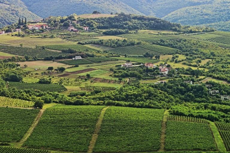 Wijngaard Koraitë