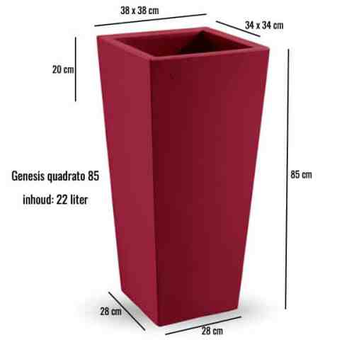 Genesis-quadrato