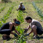 Projets et installations agricoles collectives