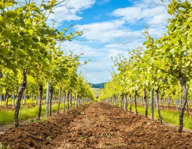relance agriculture vigne