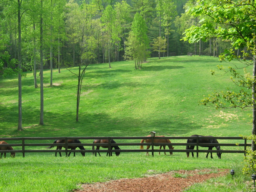 equine fly control is critical for the health of horses.