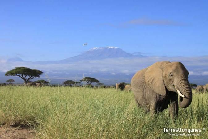 Elefante en Amboseli N.P.