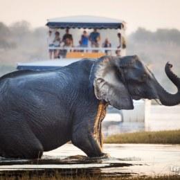 Safaris a pie y por el río en Chobe National Park