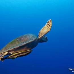 Snorkelling en el archipiélago de Komodo