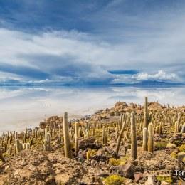 Visitar la Isla Pescado o la Isla del Inca en el Salar de Uyuni