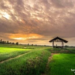 Paseos en moto y bici por campos de arroz