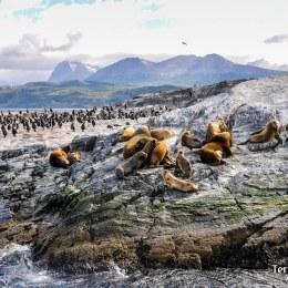 Pingüinera Punta Tombo cerca de Trelew