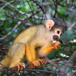 Amazonia. La selva de Madidi y la Reserva de las Pampas del Río Yacuma