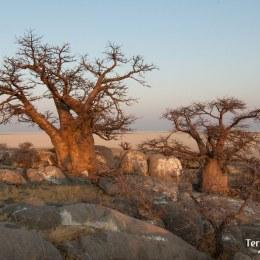 Adentrarse en las Makgadikgadi pans y la isla de Kubu