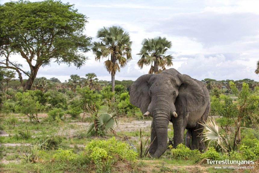 viajes-uganda-elefante-1
