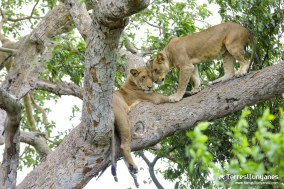 viajes-uganda-leonas