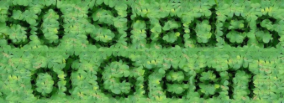 50 Shades of Green Art  Show