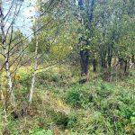 Хотите купить земельный участок в деревне Зинаевка (Наро-Фоминский район)? Звоните по телефону 8 (800) 444-64-58 | Агентство недвижимости Территория. Фото 4
