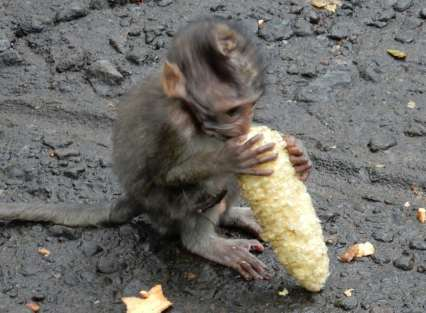 Baby with a corncob