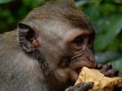 Bright eyed monkey