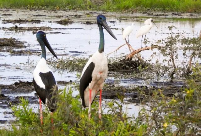 Birdwatchers paradise