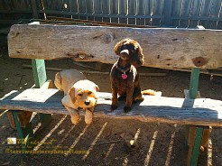 Pups on the bench