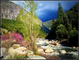 Spring in High Sierras